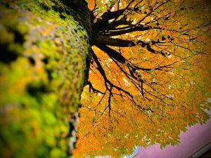 Baum von unten 1