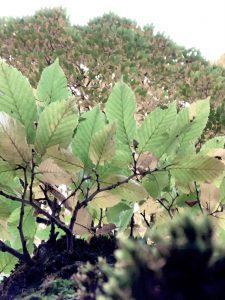 Baum von unten 2